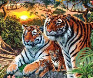 Solo para Genios, Encuentra los 16 Tigres